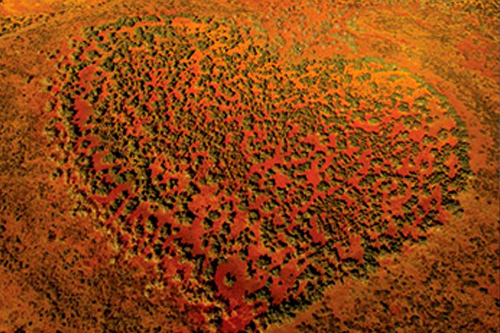 arial view of Australian outback, bushes form a heart